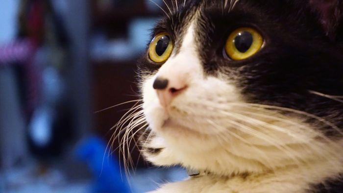 Przestraszony kot z dużymi źrenicami.