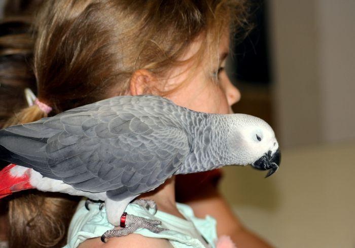 Żako na ramieniu dziecka.