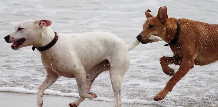 Psy podczas zabawy gryzą ogon
