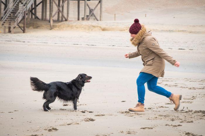 Pies w trakcie zabawy skacze na kobietę.