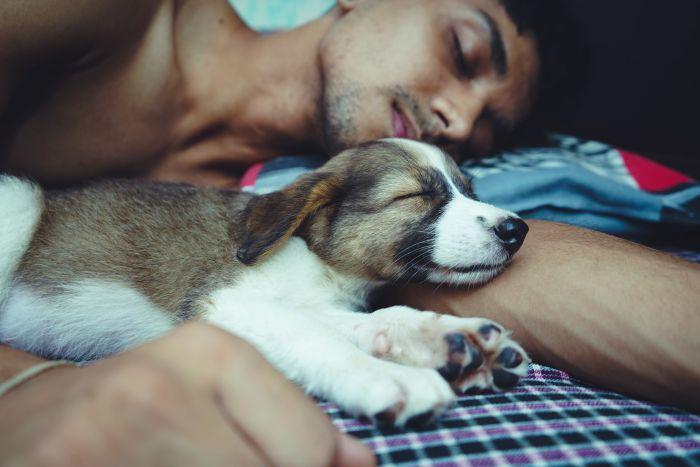 Mężczyzna ze szczeniakiem śpią na łóżku