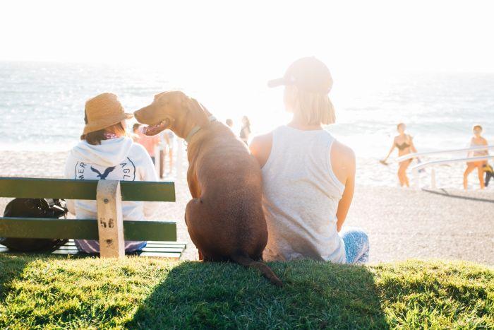 Kobieta siedzi na ławce obok psa