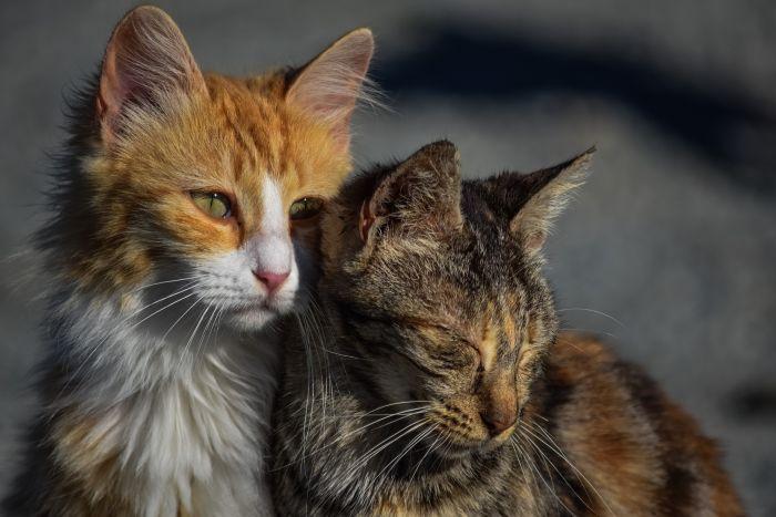 Dwa koty na dworze, koty są w złej kondycji.