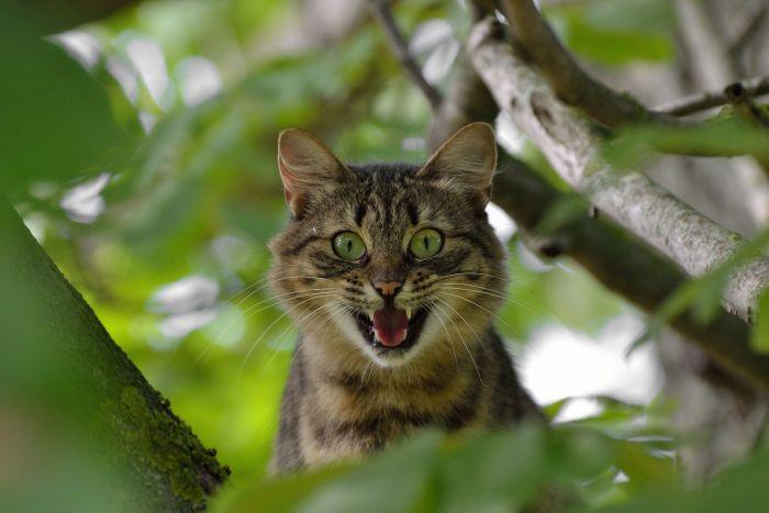 Wystraszony kot na drzewie.