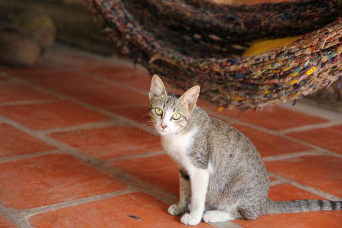 Domowy zwierzak może się zarazić wszołami od zaniedbanych i dzikich zwierząt.