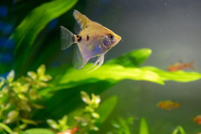 Ryba w akwarium z wypławkami
