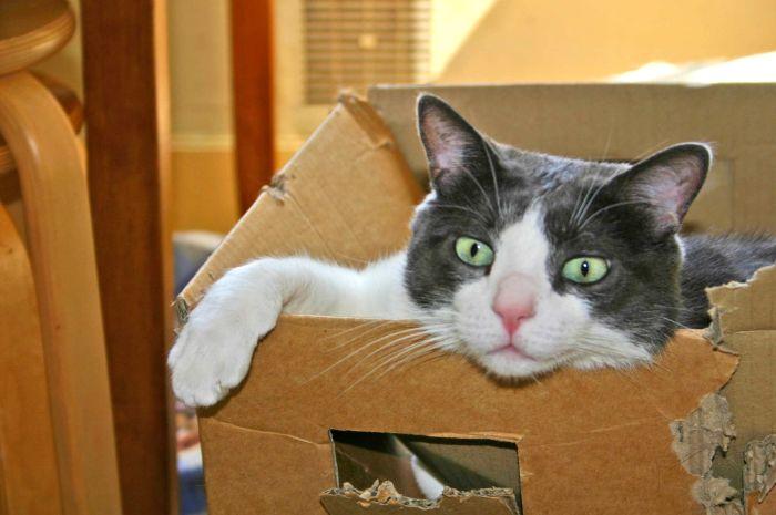 Kot w kartonie pogryzionym.