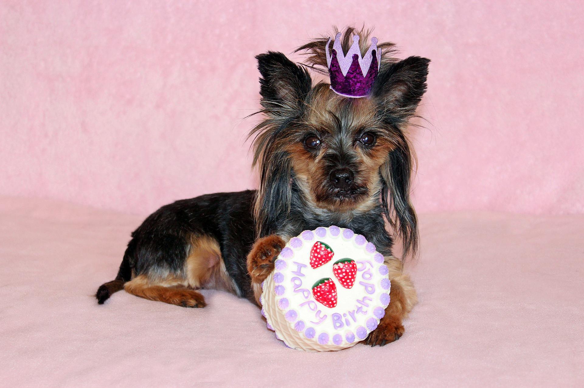 Tort dla psa najlepiej wykonać samemu, ze świeżych składników - głównie mięsa i zdrowych dla psa dodatków.