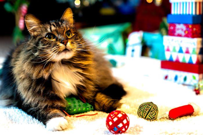 Kot wśród zabawek i piłeczek.