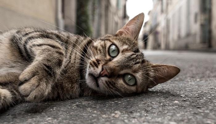 Kot leży na chodniku.
