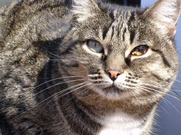 Kot z chorymi oczami.