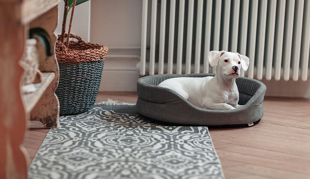 Owalne legowisko z poduszką dla psa
