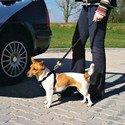 Szelki samochodowe dla psa M