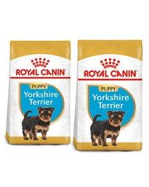 ROYAL CANIN Yorkshire terrier junior 15 (2 x 7.5 kg) sucha karma dla szczeniąt do 10 miesiąca, rasy Yorkshire terrier