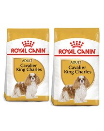 ROYAL CANIN Cavalier King Charles Spaniel Adult 15 kg (2 x 7,5 kg) karma sucha dla psów dorosłych rasy cavalier king charles spaniel
