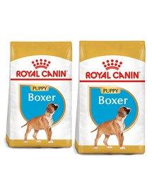 ROYAL CANIN Boxer Puppy Junior 24 kg (2 x 12 kg) sucha karma dla szczeniąt do 15 miesiąca, rasy boxer