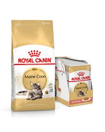 ROYAL CANIN Maine Coon Adult 10 kg + mokra karma Mainecoon 12x85 g dla kotów rasy maine coon