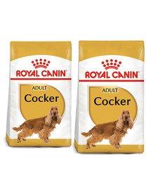 ROYAL CANIN Cocker adult 24 kg (2 x 12 kg) sucha karma dla dorosłych psów rasy cocker spaniel