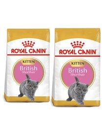 ROYAL CANIN Kitten british shorthair 20 kg (2 x 10 kg) karma sucha dla kociąt, do 12 miesiąca, rasy brytyjski krótkowłosy