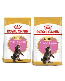 ROYAL CANIN Maine Coon Kitten karma sucha dla kociąt, do 15 miesiąca, rasy maine coon 20 kg (2 x 10 kg)
