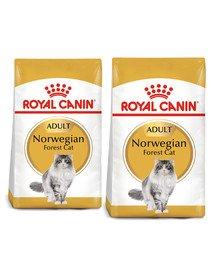 ROYAL CANIN Norvegien 20 kg (2 x 10 kg) karma sucha dla kotów dorosłych rasy norweski leśny