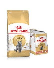 ROYAL CANIN British Shorthair karma sucha dla kotów dorosłych rasy brytyjski krótkowłosy 10kg + karma mokra 12x85g