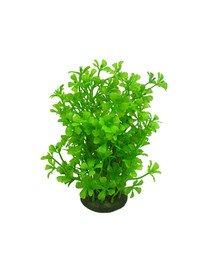 Roślina Kępkowa Cp-057 6'' (15cm)