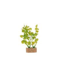 Rośliny na kamieniu śred. 20 cm 6 szt.
