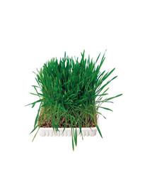 Trawa dla gryzoni w pojemniku 100 g