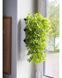 Moduł Ścienny Versa Garden Herbs`