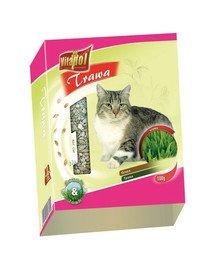 Trawa w pojemniku dla kota 100g