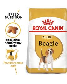 Beagle adult 12 kg