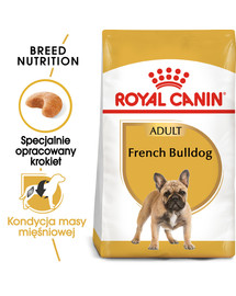 French bulldog adult 3 kg