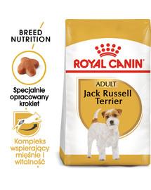Jack russell terrier adult 1.5 kg