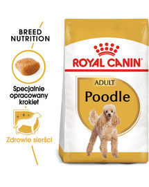 Poodle adult 1.5 kg