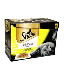 12x85g Delicacy in Jelly - smaki drobiowe w sosie mokra karma dla kotów