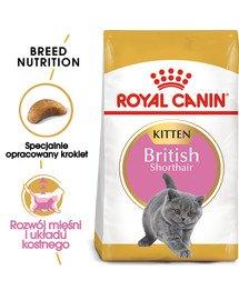 Kitten british shorthair 2 kg karma sucha dla kociąt, do 12 miesiąca, rasy brytyjski krótkowłosy