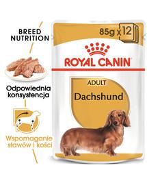Dachshund karma sucha - pasztet, dla psów dorosłych rasy jamnik  85 g