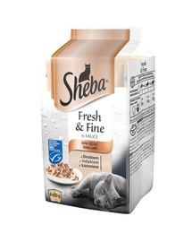 saszetka 72*50g Fresh & Fine - mokra karma dla kotów w sosie (z Mięsem Drobiowym, z Indykiem, z Łososiem)