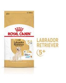 Labrador Retriever Adult 5+ 12 kg karma sucha dla dojrzałych psów rasy yorkshire terrier, powyżej 5 roku życia