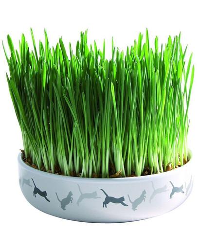 Miska ceramiczna 15 x 4 cm na trawę dla Kota