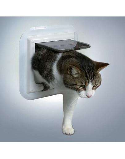 Drzwi dla kota do szklanych drzwi