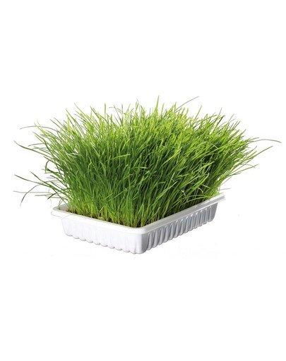 Trawa dla kota w pojemniku 100 g