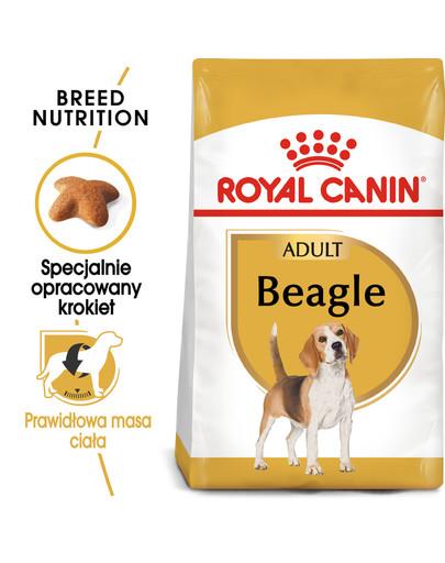 Beagle adult 3 kg