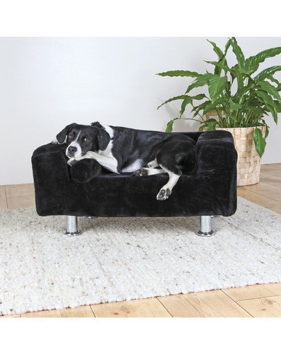 Sofa King Of Dogs. 78 × 55 cm