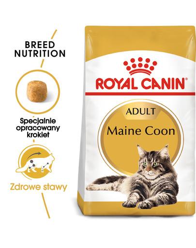 Maine coon 10 kg + 2 kg gratis!