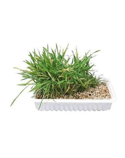 Trawa dla kota w pojemniku 130 g