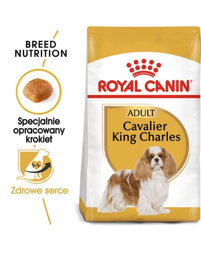 Cavalier King Charles Spaniel Adult 1.5 kg karma sucha dla psów dorosłych rasy cavalier king charles spaniel