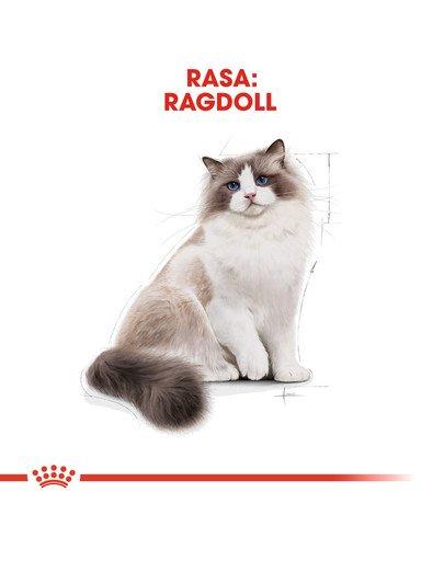 Ragdoll adult 400 g karma sucha dla kotów dorosłych rasy ragdoll