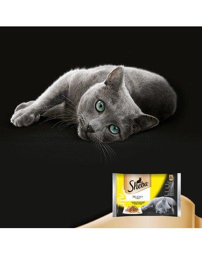 Saszetka 48x85g Delicacy in Jelly Smaki Drobiowe - mokra karma dla kotów w galaretce (z kurczakiem, z indykiem, z kaczką, z drobiem)